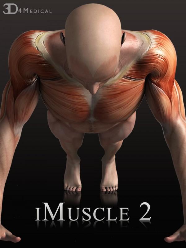 パーソナルトレーニングで筋肉強化!iPadで筋肉の動きをチェック